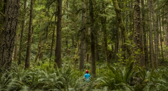 A small boy pictured among lush greenery and tall trees.