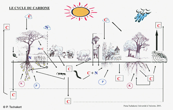 Aln No 58 Tschakert Figure 2 Visual Representation Of The Carbon
