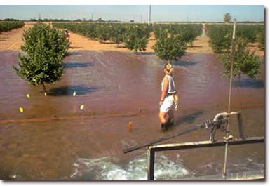 Irrigation flooding on a Mesa Valley plot
