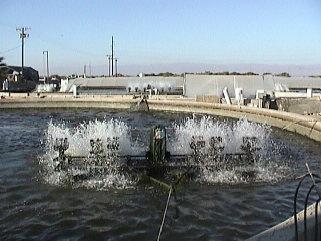 Pictures from tilapia farms in california for Fish farms in california