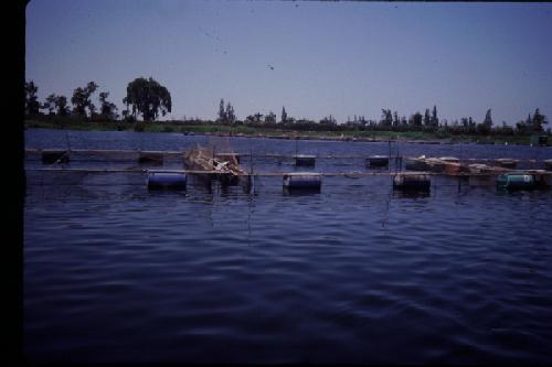 PHOTOS TILAPIA FARMS - Outside the US