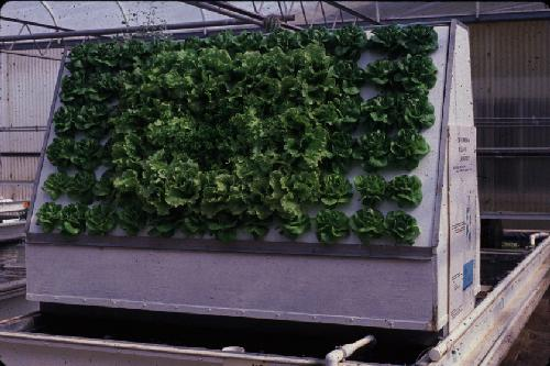 Simple aquaponics system vertical aquaponics system design for Hydroponic system with fish