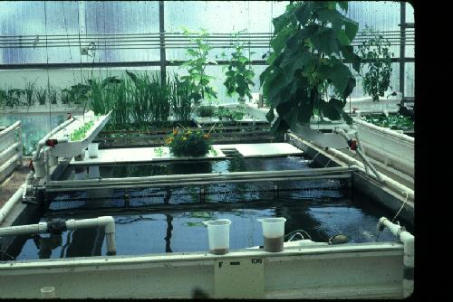 Aquaponics for Arizona aquaponics