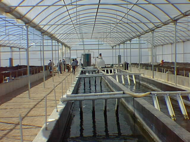 Tanks for Arizona aquaponics