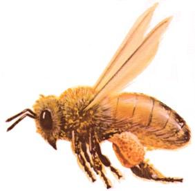Information about bees gute projektthemen