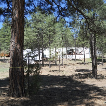 Thanks to a UA extension program, property owners in woodland areas can get expert assistance in thinning excess tree cover on their properties, thus reducing the risk of fire damage and increasing forest health. (Photo by Lee Ann Beery/Arizona Department of Forestry)