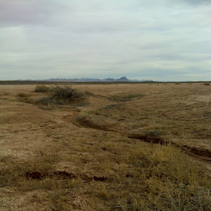 Drought impacted landscape in southern Arizona. (Photo by Mike Crimmins)