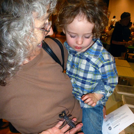 Participant Linda Brewer with grandson Ascher Courtney, holding a vinegaroon (an arthropod related to spiders) at the 2012 Arizona Insect Festival. (Photo by Rick Brusca.)