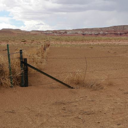 Drought impacted landscape in Northern Arizona (Photo by Mike Crimmins)