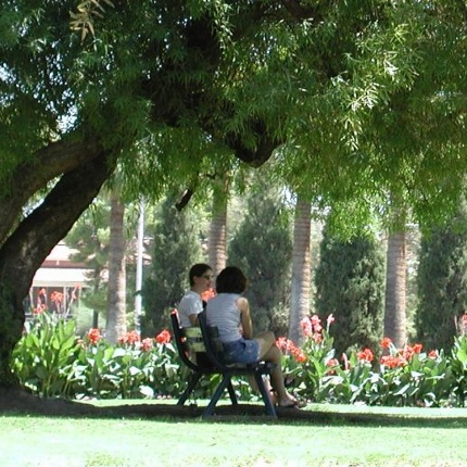The UA Campus Arboretum provides scenery, shade and economic benefits to the University. (Photos courtesy of the Campus Arboretum)