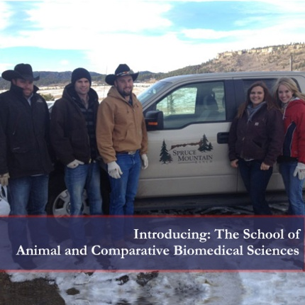 Members of the 2013 Livestock Judging Team meet with Andy Maupin (far left), manager of Spruce Mountain Angus Ranch in Larkspur, Colo. during a workout trip this winter. Members of the team are (l-r): Luke Menges-Safford; Dominic Brown-Davis, Calif.; Tatyana Zaleski-Peoria; Kelli Rovey-Buckeye. Missing is Karli Eaves-Buckeye. (Photo courtesy of Kelli Rovey)