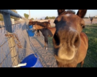 Embedded thumbnail for Nicole Chapman: Blue Chip Workhorse
