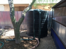 Water harvesting system for irrigating native trees (Photo: Mónica Ramírez-Andreotta)