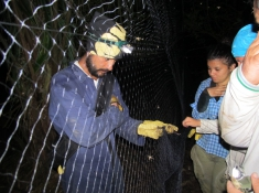 Tolu municipality, Sucre department (Colombia). Capturing bats for conectivity analisys in the caribbean of Colombia.