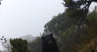 An Andean bear caught on one of several field cameras maintained by Vela-Vargas and his research team.