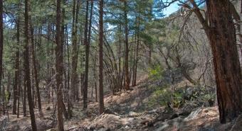 Kelsey Spring Trail in Northern Arizona. Photo credit Deborah Lee Soltesz