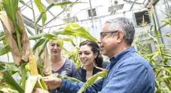 UArizona Students Work on the Maize Genomics Project
