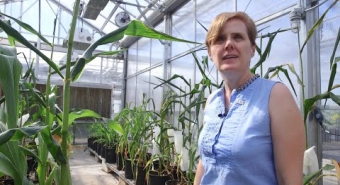 Embedded thumbnail for Maize Aflatoxin Research