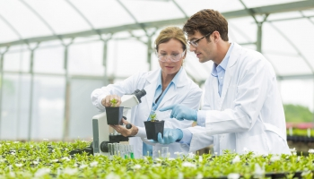 Environmental Horticulture Degree in the College of Agriculture and Life Sciences, University of Arizona