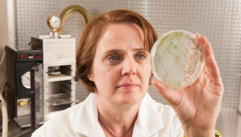 Microbiology Degree in the College of Agriculture and Life Sciences, University of Arizona