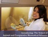 Arizona Veterinary Diagnostic Laboratory