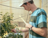 Undergrad's Research Involves Plant With Anti-Tumor Potential