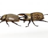 Bug Bonanza: 7 Big, Colorful Critters to Try to Spot This Monsoon Season