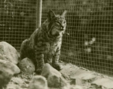 6 Historical Highlights and Traditions All Wildcats Should Know