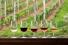 Five wine glasses on a ledge with rows of green grapevines in the background