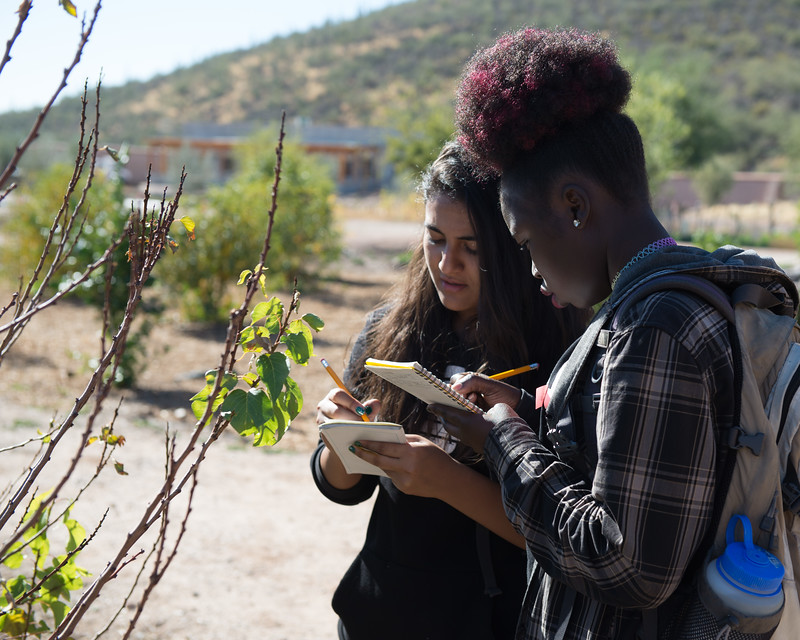 Sunnyside High School students make phenological observations in Tucson, Arizona.