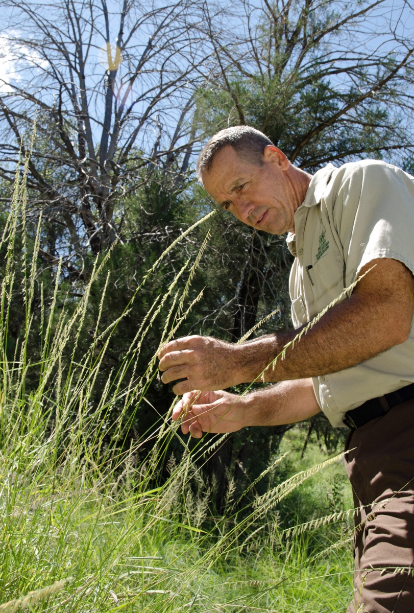 A naturalist observes grasses in the Southwest.
