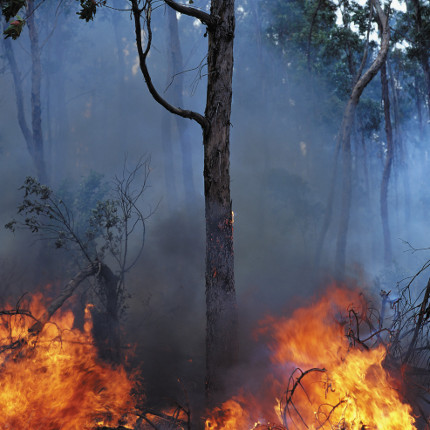 Decades of research have demonstrated that fire is an essential, basic process in forests, woodlands and grasslands around the world. Thus, the issue is not so much whether fire is here to stay - it is, despite all of our efforts to suppress it - but rather what kind of fire we will have on the landscape.