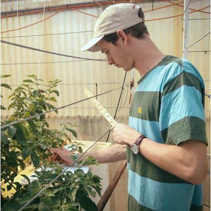 Von Bieberstein measures the average leaf size and height of each plant weekly to collect data on growth. (Photo by Michaela Brumbaugh)