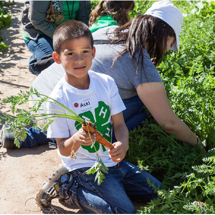 A Tucson child learns about gardening at Tucson Village Farm, one of a number of programs offered through UA Cooperative Extension, which is celebrating its 100th anniversary this year. Photo credit: Judy A. Davis