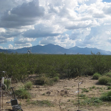 Chemical odor plume measurements were made by proton transfer reaction mass spectrometry and anemometry in the University of Arizona Santa Rita Experimental Range. (Photo courtesy of Leif Abrell)