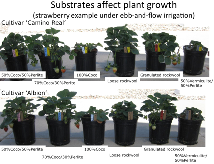 Hydroponic Strawberry Substrates
