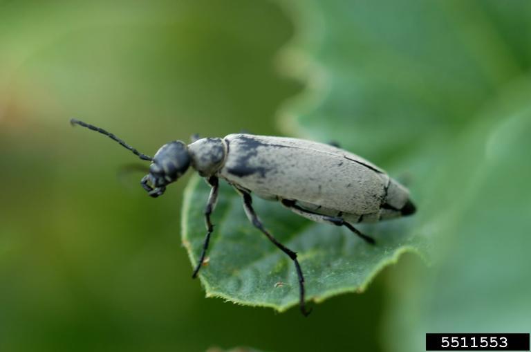 Backyard Gardener Arizona S Interseting Insects April