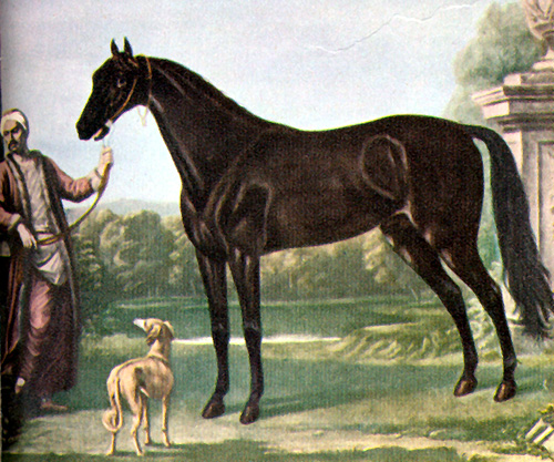 equipoise for race horses