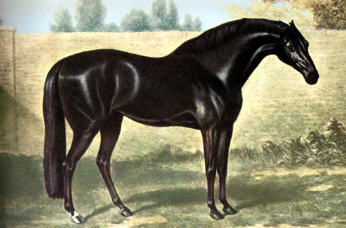 equipoise racehorse