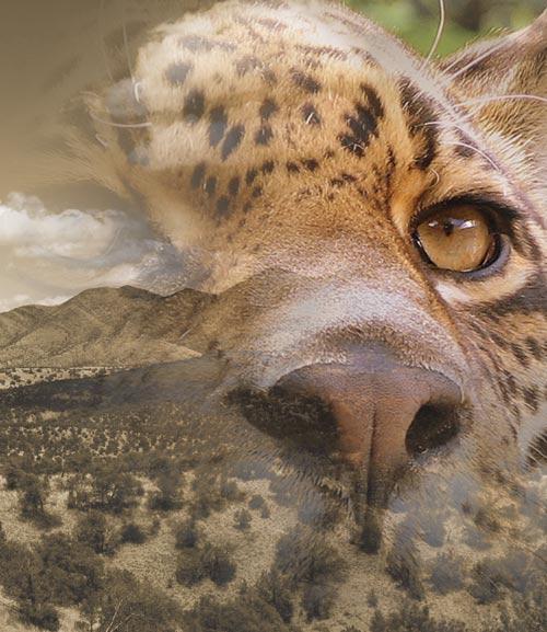 Jaguar Research