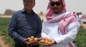 Joel Cuello (left) with a potato farm operator in Ha'il, Saudi Arabia. (Photo: Ronnie DeGuzman)